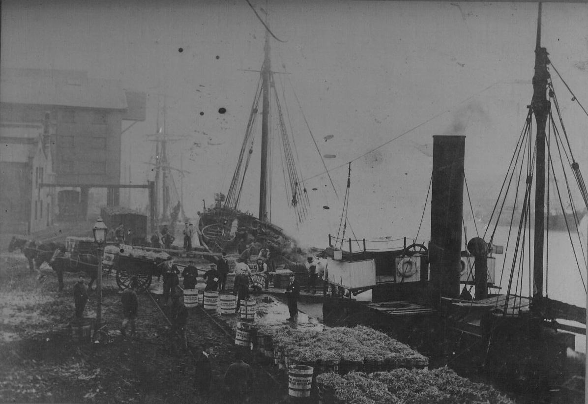 photo of steam carrier Supply loading herrings